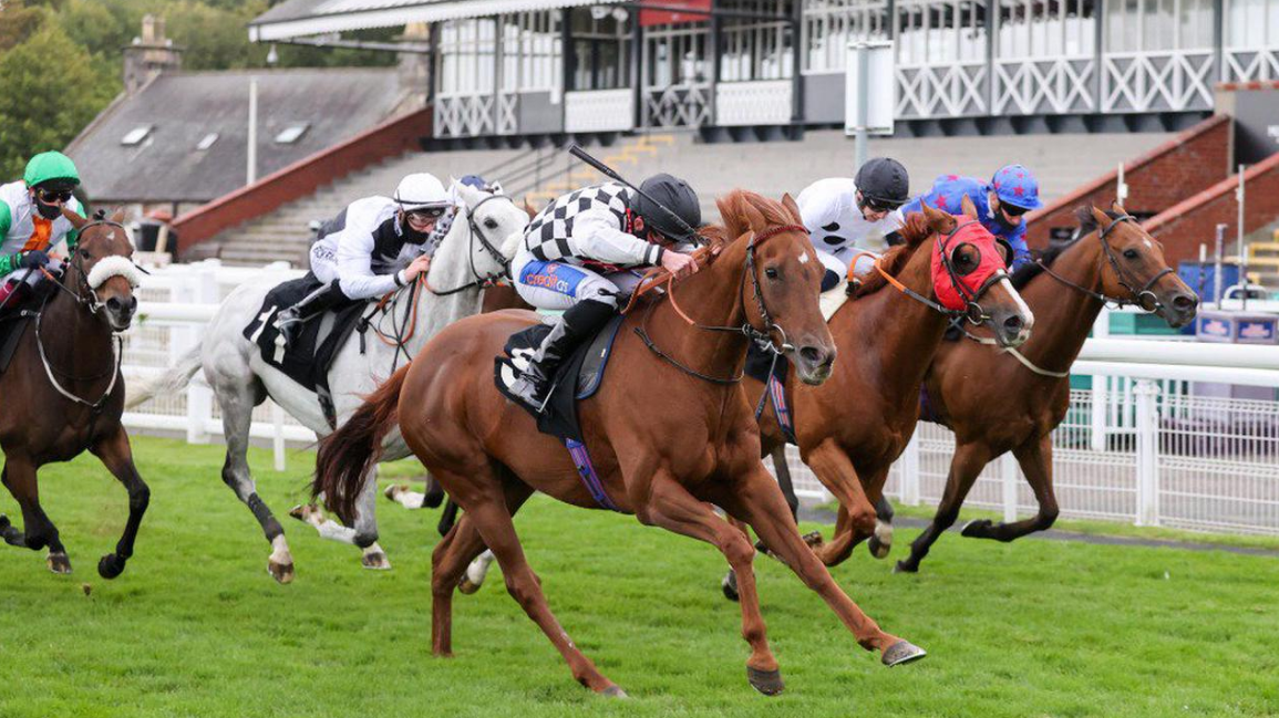 quality horse racing tips